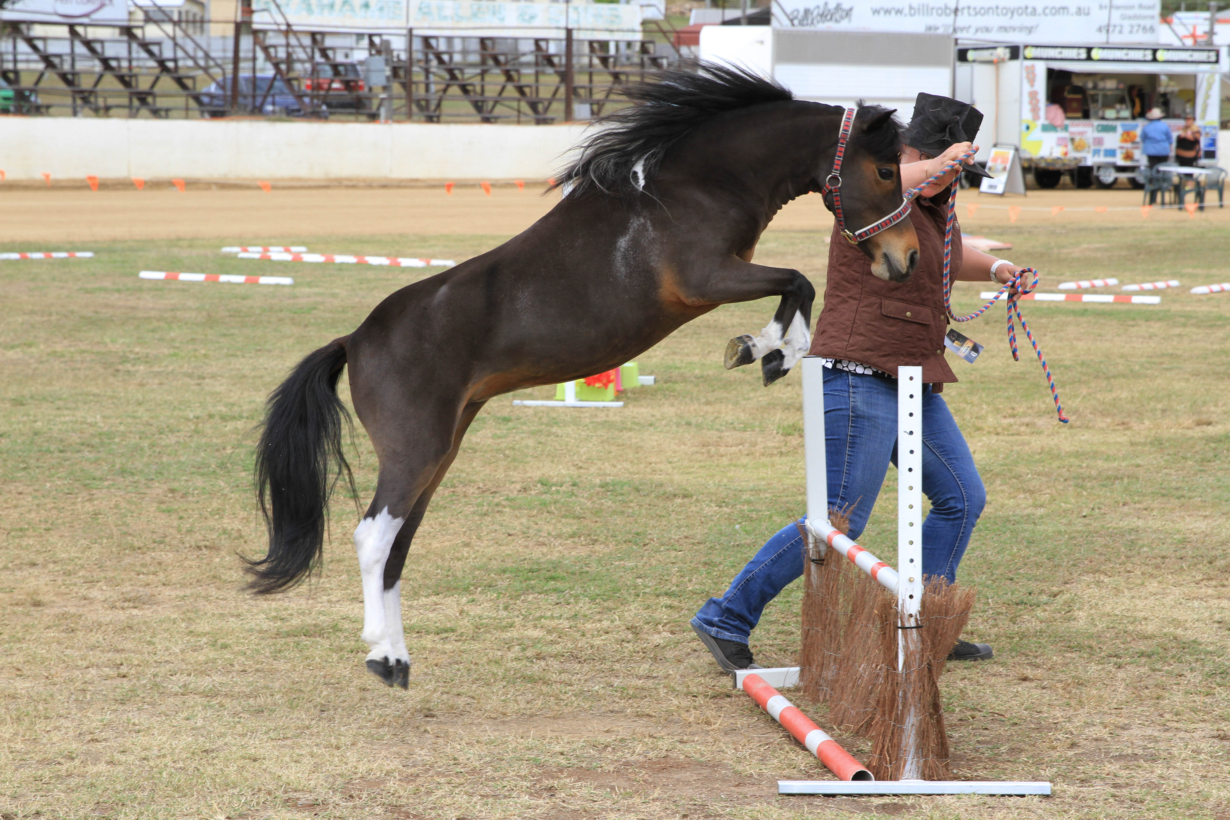 The Amhs Gladstone Miniature Horse And Pony Extravaganza Is Open To