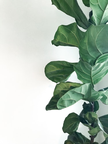 GUIDE TO INDOOR PLANTS - Gladstone News