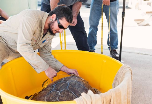 Local Volunteers get hands-on Turtle Rescue Training